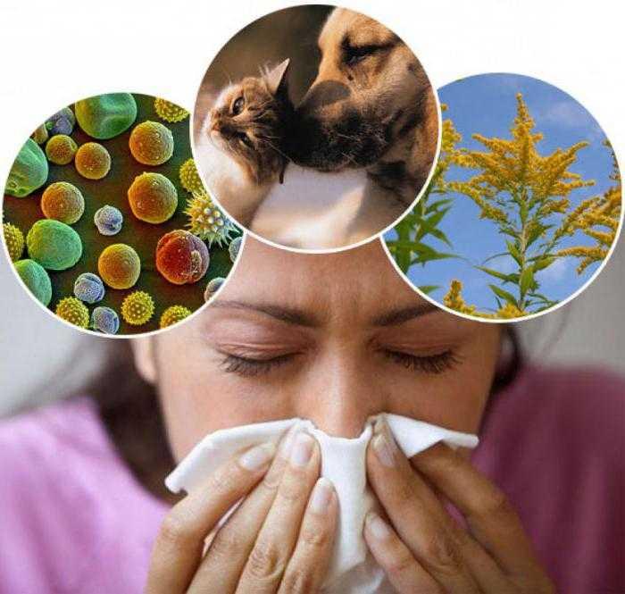 21 vek – vek allergii