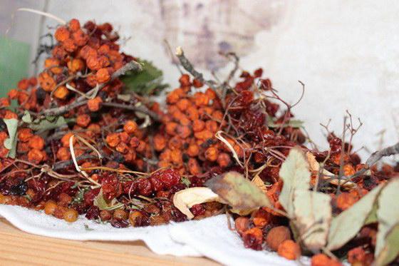 Sbor i hranenie plodov krasnoj ryabiny